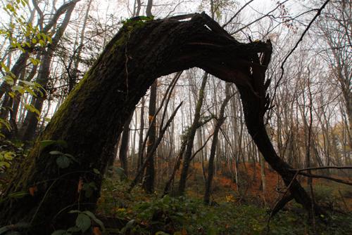 arbre en arc