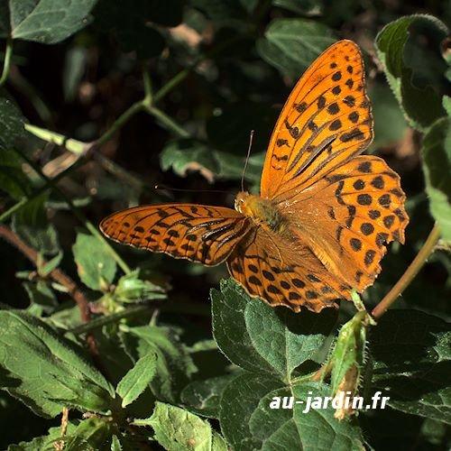 papillon-tabac-espagne.jpg